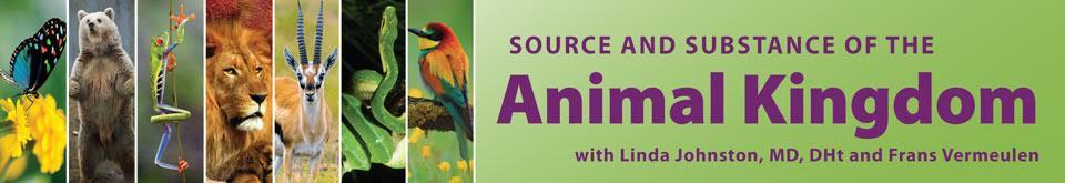 animal kingdon banner