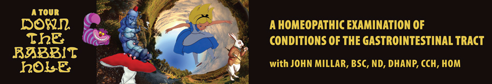 A Tour Down the Rabbit Hole