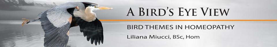 A Bird's Eye view banner